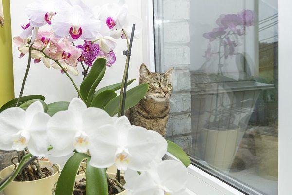 orquídea para la energía positiva