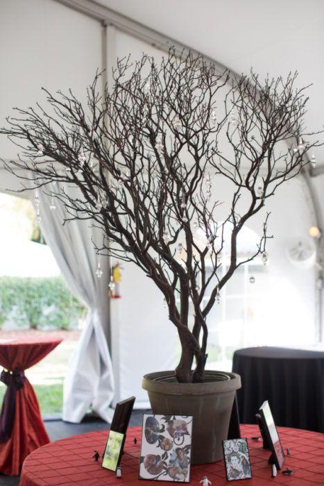 Manzanita Wishing Tree