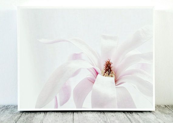 Star Magnolia Print Star Magnolia Photo Flower by CristylClear