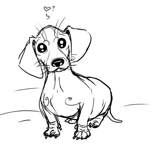 Line Art Dog Tattoo : Best ideas about dachshund drawing on pinterest