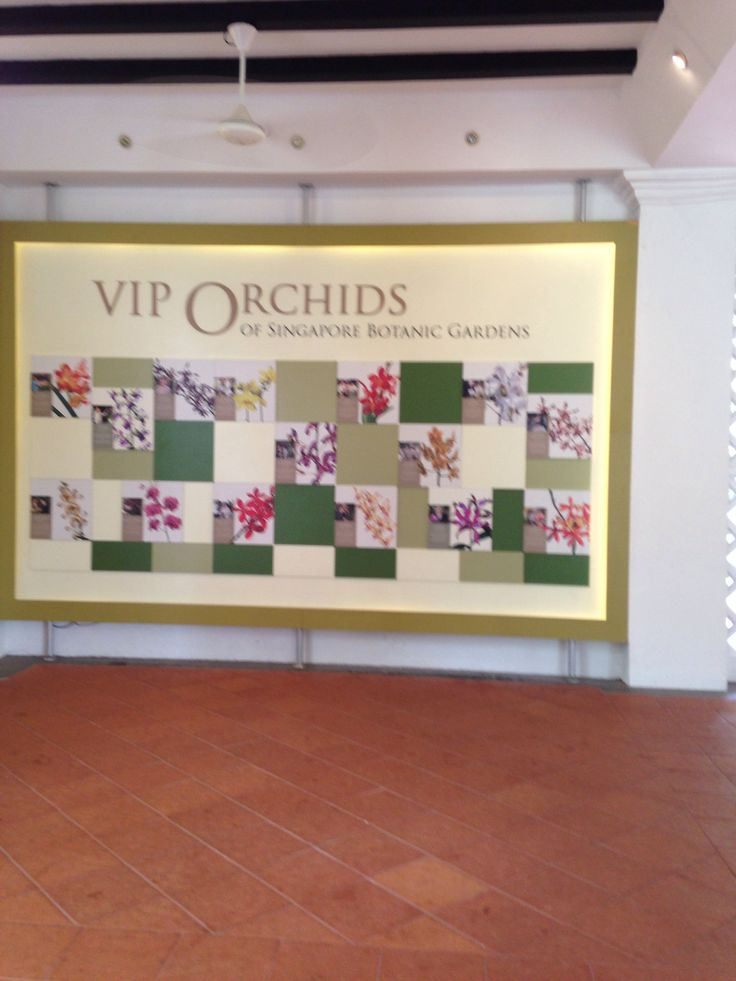 VIP Orchid