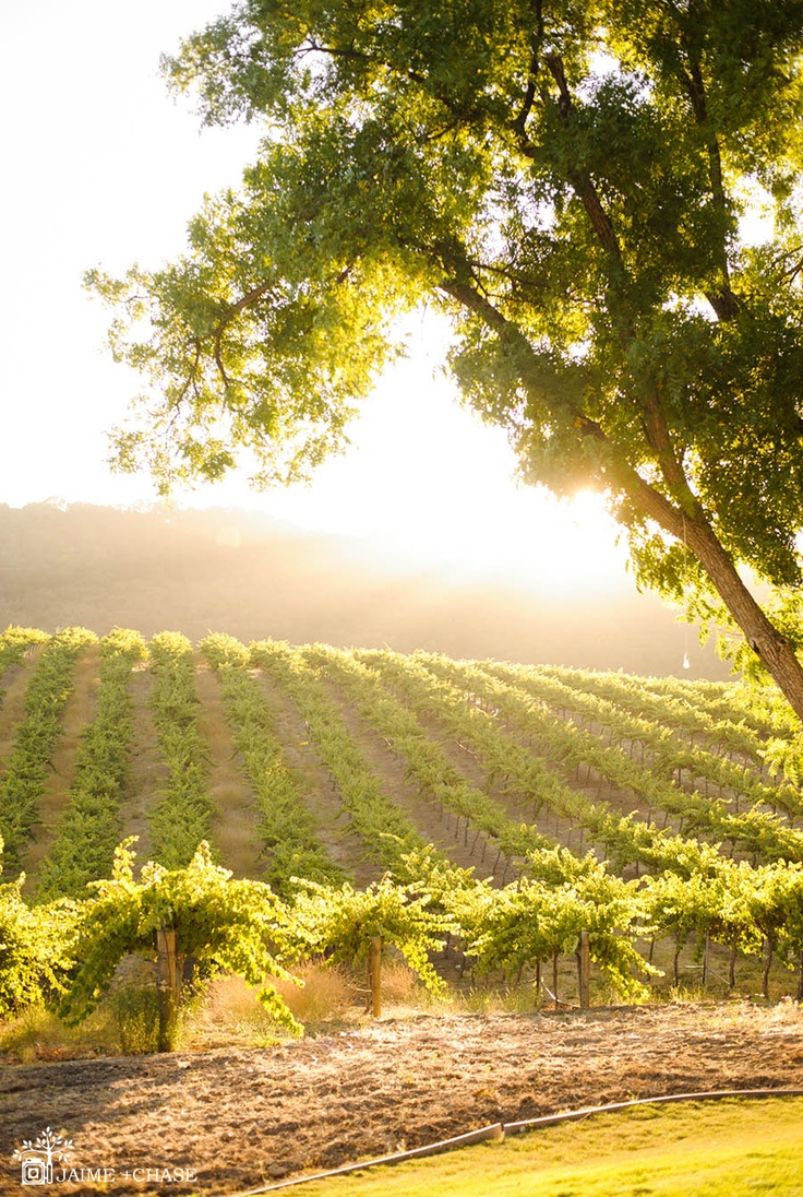 beautiful wedding places in northern california%0A Hammersky Vineyards  u     Inn  Pasa Robles  CA