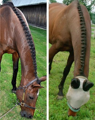 Braideez braiding wire - how brilliant does this braiding look? I wonder if it would work on humans...