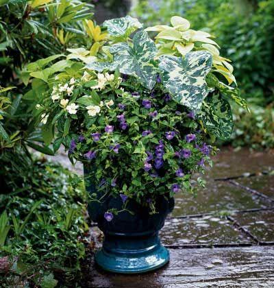 Shade Garden Container