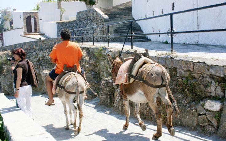 Får en sjov ridetur på æsel på Rhodos. Se mere på www.apollorejser.dk/rejser/europa/graekenland/rhodos
