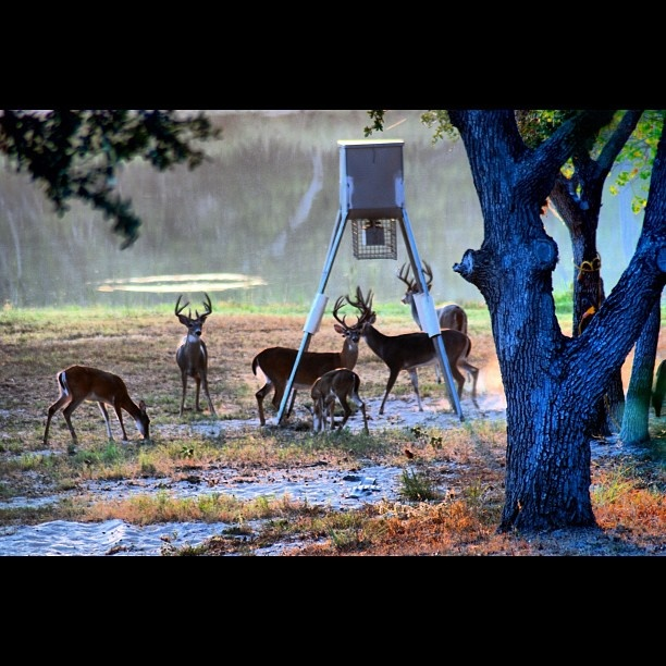 1000 images about wildlife with gravey on pinterest for Deer scenery