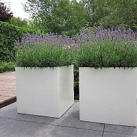 Polyester bloembakken en plantenbakken - Tuinvoordeel.eu