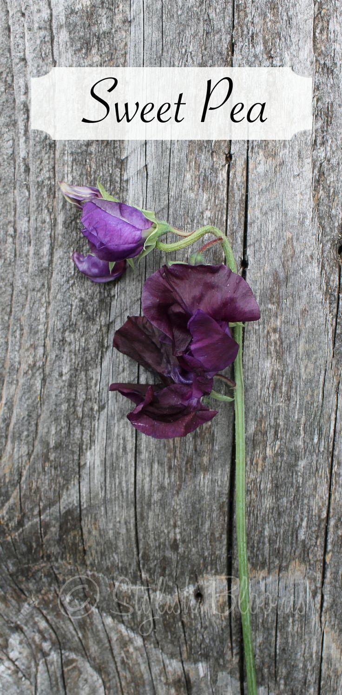 best flowers images on pinterest floral arrangements