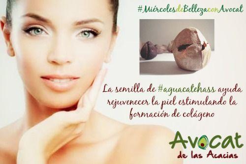 #MiércolesdeBellezaconAvocat La semilla de #aguacatehass ayuda rejuvenecer la piel estimulando la formación de colágeno