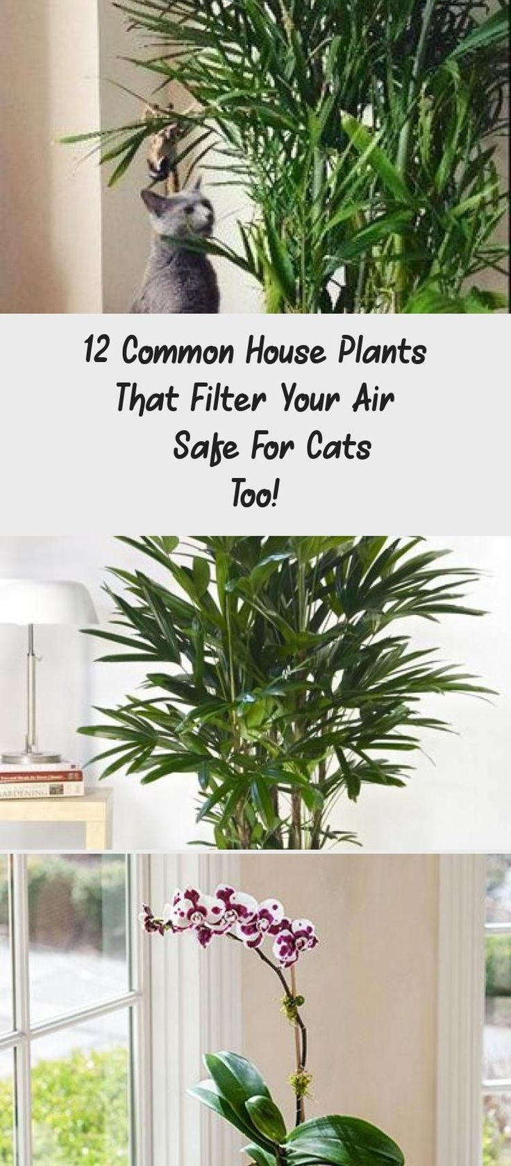 12 Common House Plants That Filter Your Air Safe For