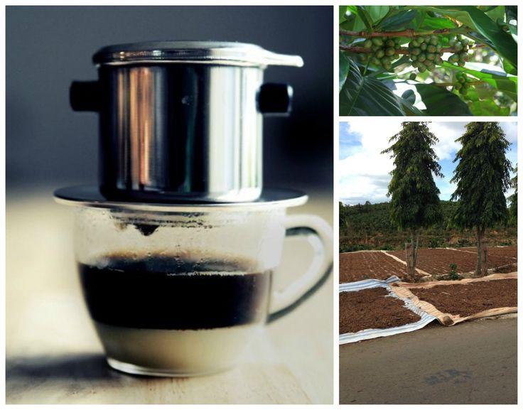 Vietnamese coffee. Беспощадно крепкий и сладкий вьетнамский кофе)  Плантация кофе по дороге из Фантьета в Далат - в зеленом виде, сохнущем и готовом) Кофе во Вьетнаме готовят с помощью Фина - небольшая металлическая чашка с фильтрами, куда насыпается несколько (много) ложек кофе, а потом заливается вода. Кофе медленно капает в прозрачный стакан, куда уже бережно добавлено сгущенное молоко)