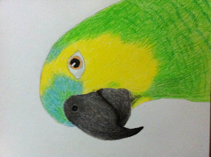 First drawing in two years   Oil pastel