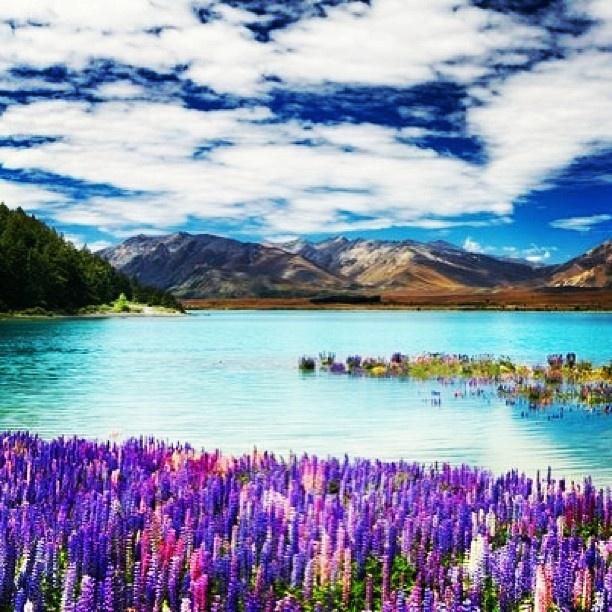 New Zealand Lake Tekapo Beautiful Even In Winter