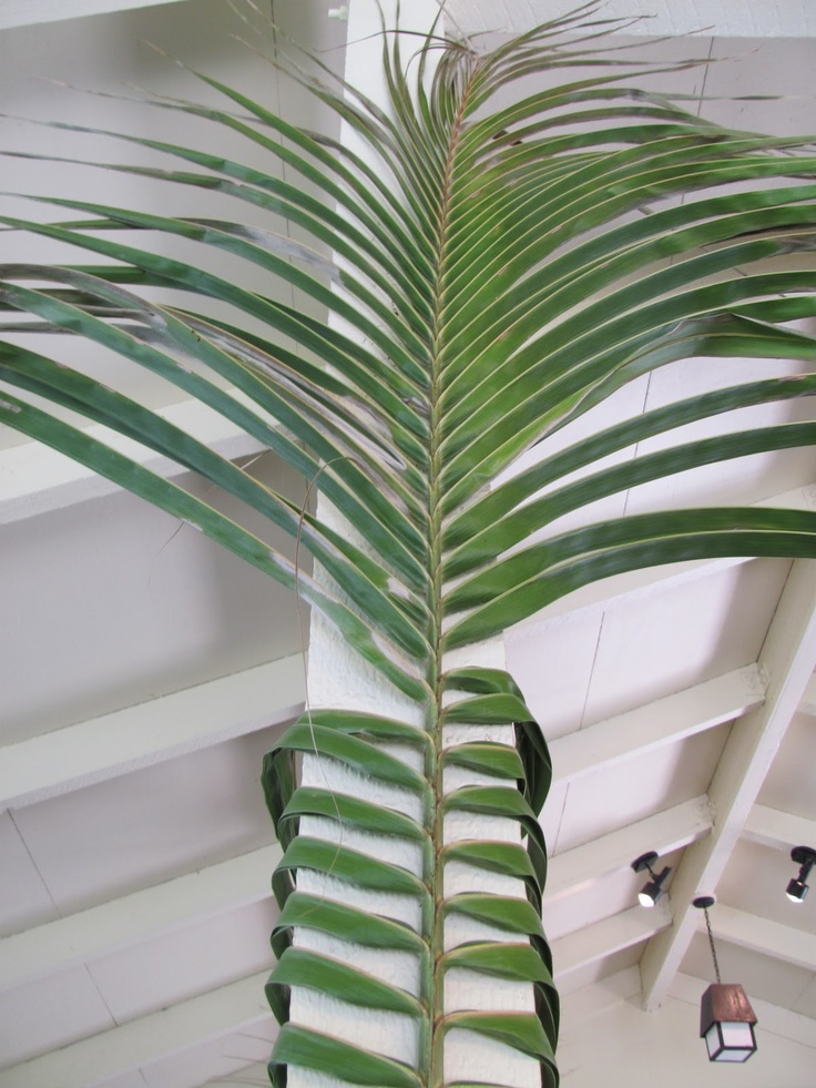 Tropical decorating idea - wrap palm frond around post, braid in back