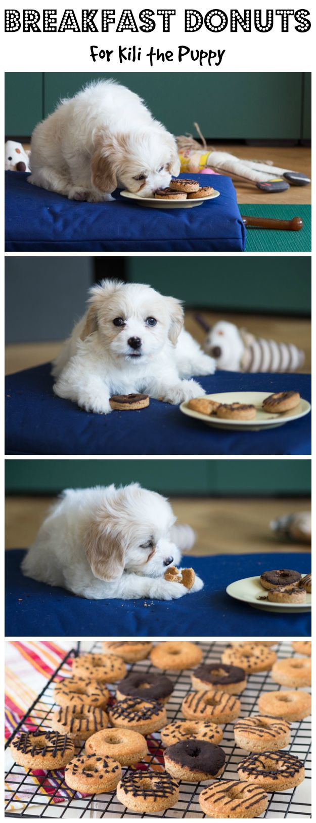 best images about Pet on Pinterest Chihuahuas Poodles and
