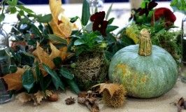 This blog is v.personal and brimming with useful gardening tips.