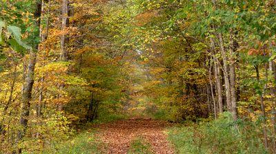 The Park Next Door - Baxter's Hollow State Natural Area - Sauk City, WI - THE PARK NEXT DOOR
