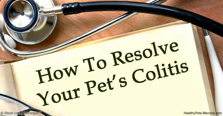 Colitis is an inflammation of the colon and can occur in your pets. Find out the causes, symptoms and treatments if your pet acquires this disease. http://healthypets.mercola.com/sites/healthypets/archive/2016/07/03/colitis.aspx