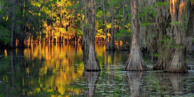 Фото: Фантастические кипарисы озера Каддо (Фото)