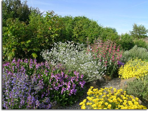Desert jewels nursery spokane washington former for Low growing landscape plants