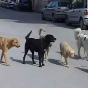 Dal Partito Democratico in arrivo la tassa sui cani non sterilizzati Il Partito Democratico con una nuova legge, presentata dai deputati Anzaldi, Preziosi e Cova, intende tassare i cittadini italiani proprietari di cani non sterilizzati. #cani #randagismo #pd