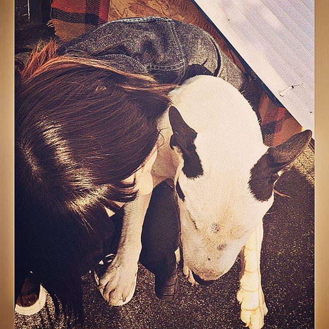 . なんか嫌がってたけど めげない しょげない 泣いちゃダメ~~~ .  #ジャック #愛犬 #ただいま #ブルテリア #ミニチュアブルテリア #寒そう #元気なかった #長生きしてね  #bullterrier #dog #instadog #instagood #love #l4l #ChristmasEve #doglove #pet  #いぬすたぐらむ #🐶