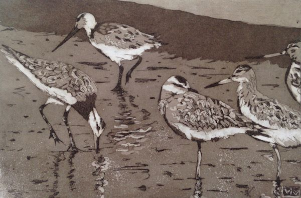 Godwits 2 - Intaglio Etching with aquatint.