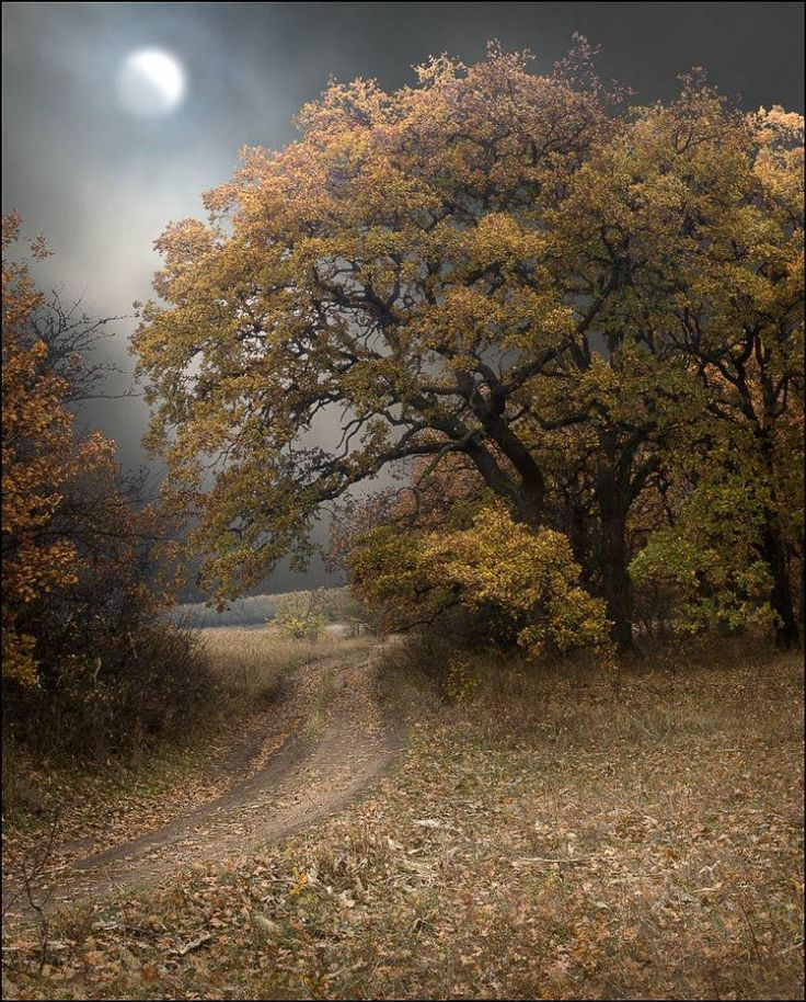 Harvest Moon, The Roads, Country Roads, Nature Pictures, Autumn Leaves, Beautiful, Sleepy Hollow, Full Moon, Dirt Roads