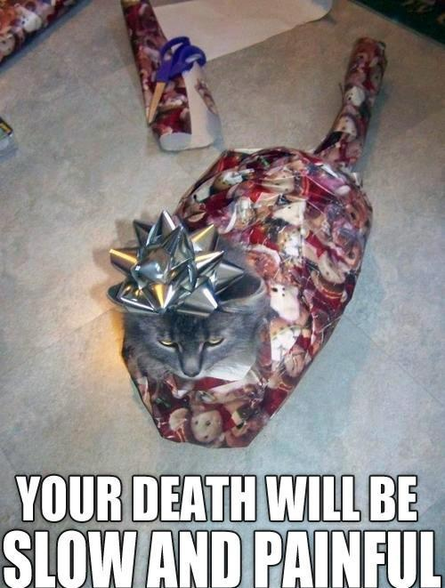 """gift cat - """"Your death will be slow and painful"""" I'm trying to figure out how they go him to sit still long enough for the paper wrapping... Even if I could wrap my cat like that... I KNOW the minute I stuck the bow on their head they would be all over the room bouncing like crazy!"""