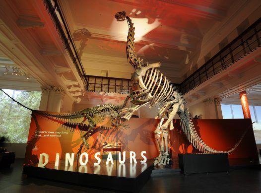Dinosaurs Exhibition at the Australian Museum, Australia's oldest museum.