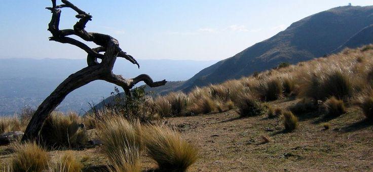 Fotografia tomada en el ascenso al Cerro La Banderita.