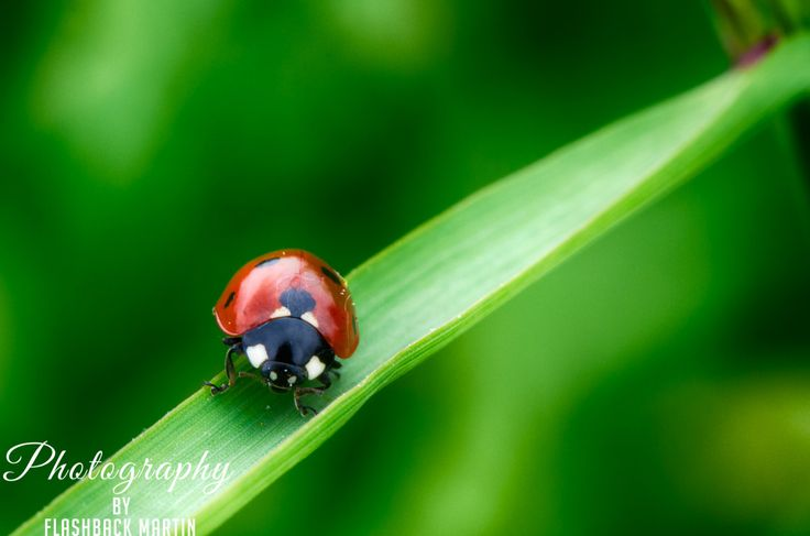 Hiding in the Grass by Martin Flashback - Photo 124423249 - 500px