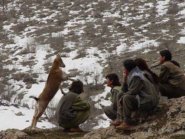 Kurdistan Workers' Party soldiers and cheeky monkey, commonly known as PKK near the Iran/Iraqi Kurdistan border
