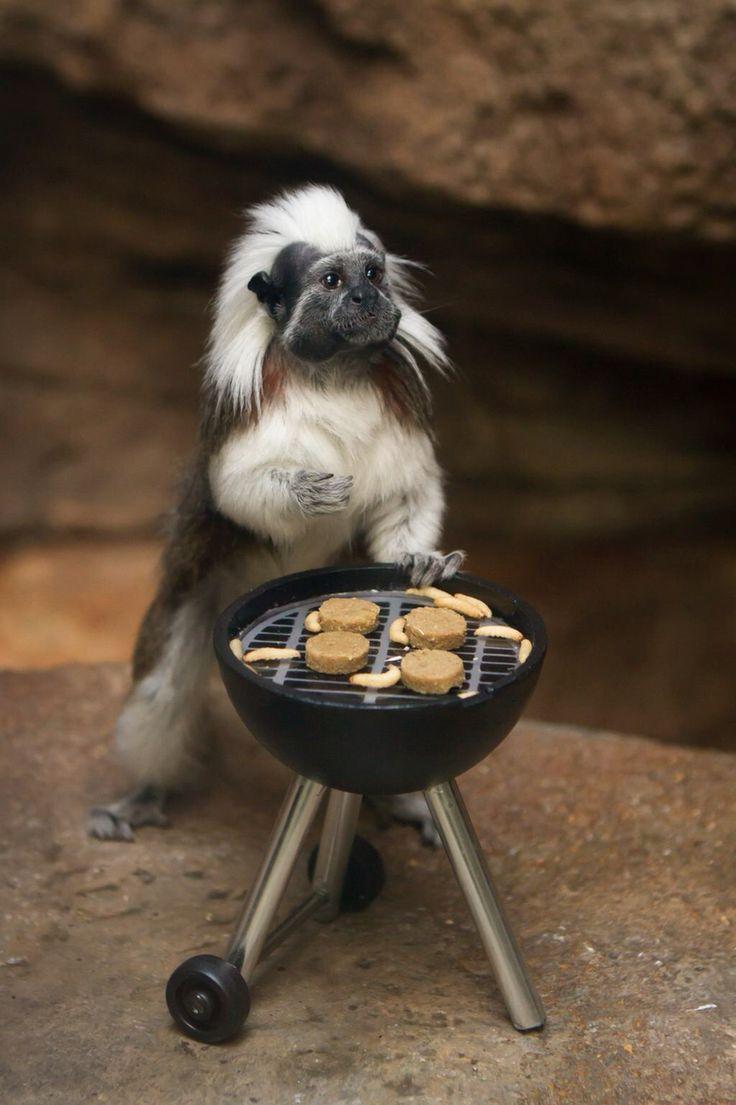 Www Bing Com1 Microsoft Way Redmond: 111 Best Animal Enrichment Ideas! Images On Pinterest