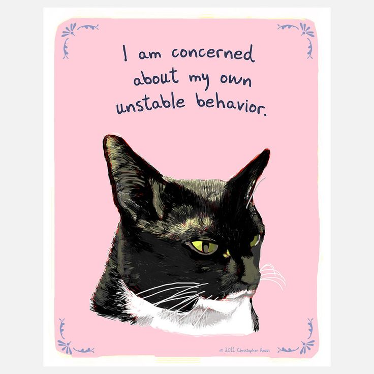 Best Images About Crybaby On Pinterest Cats Nice And Pearls - 17 funny illustrations that explain your cats unusual behaviour