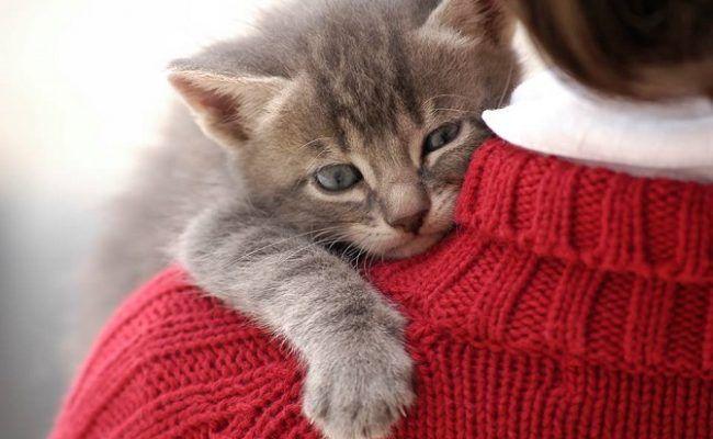 Cat 猫 肩に乗る 理由 気持ち 子猫 可愛い猫 猫