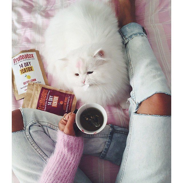 Ноги + рваные джинсы + белый кот + чашка кофе + еда + розовый свитер + одеяло