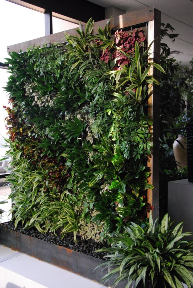 vertical gardens and green wall houseplants