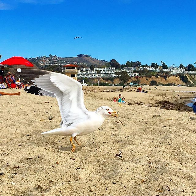Caliparks : Doheny State Beach