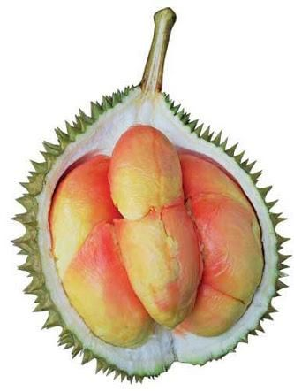Rainbow Durian form Papua, Indonesia. Everybody must try it! #Papua  Exotics