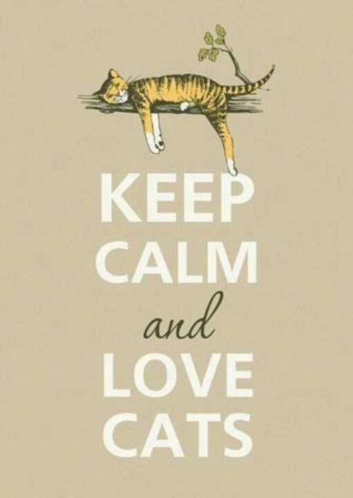 Love cats♥