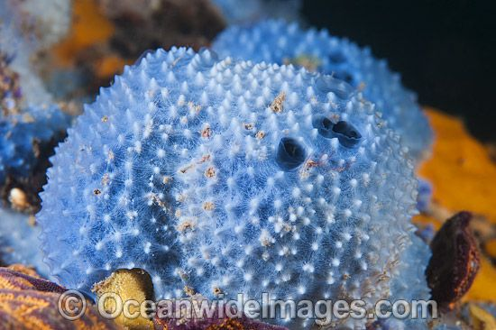 55 best Sponges images on Pinterest | Coral reefs, Navy ...