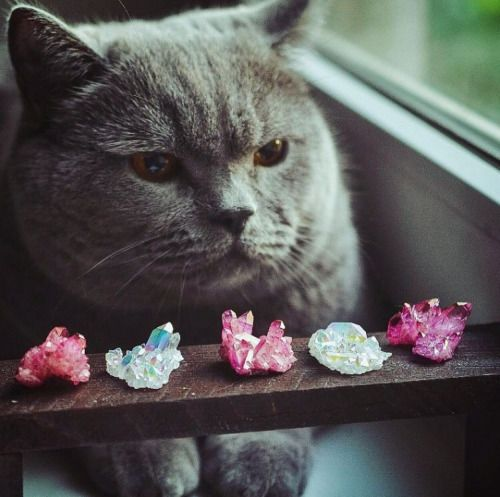mineraliety:  Kitty Keeper of the Crystals! Via @beauty.creek...