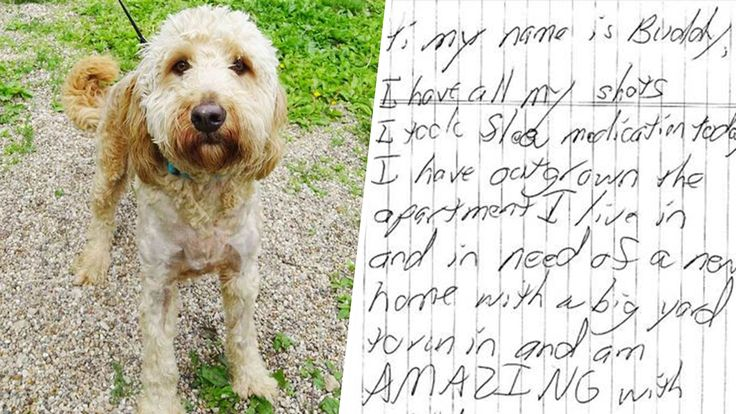 This sweet labradoodle was discovered in a small cage with a note that read, 'I hope I can bring joy to my new family.'