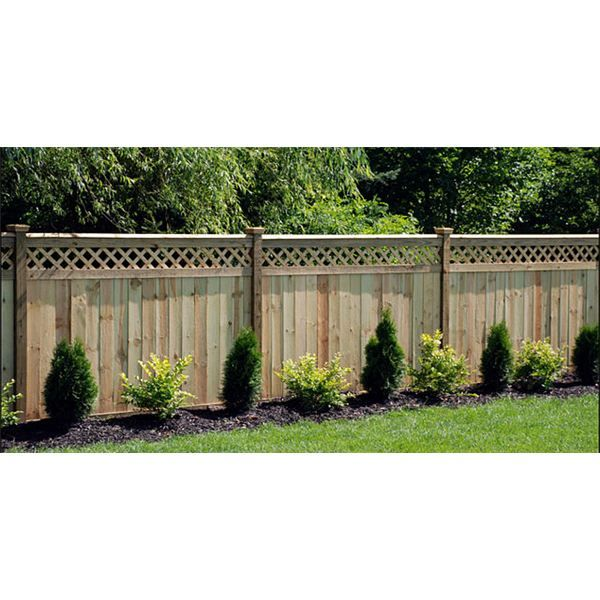 shrubs along fence