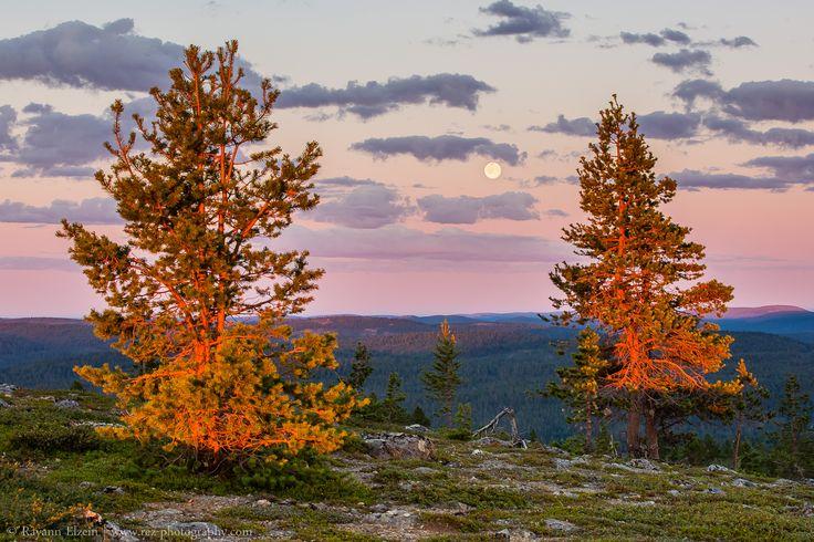 Lapland Midnight Sun. On the top of Otsamo Fell, Finnish Lapland. Photo by Rayann Elzein. #arcticshooting #finlandlapland