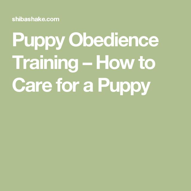 Puppy Obedience Training – How to Care for a Puppy