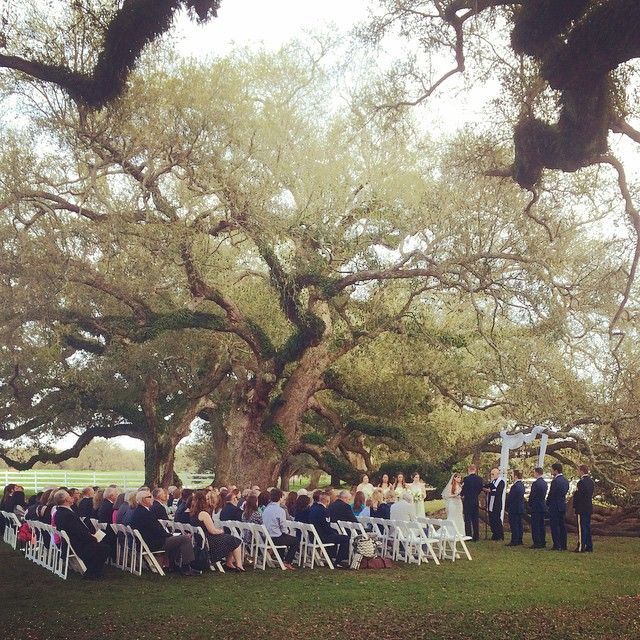 Ceremony Under A Tree: New Orleans Wedding Venue