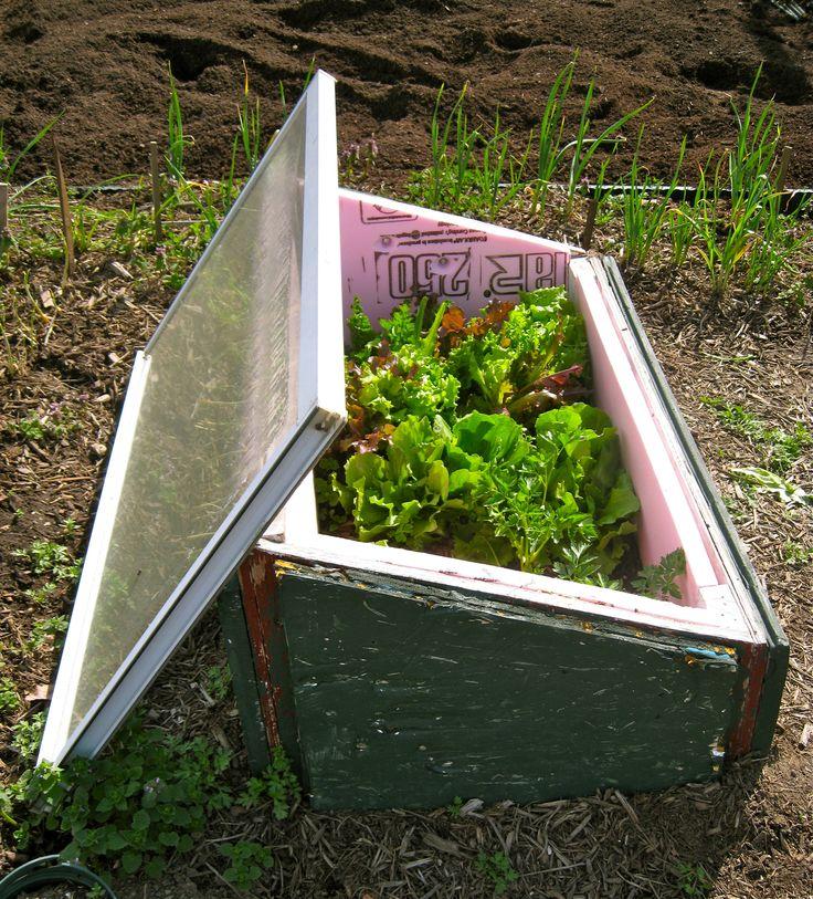 Build A Cold Frame For Winter Vegetables Gardening