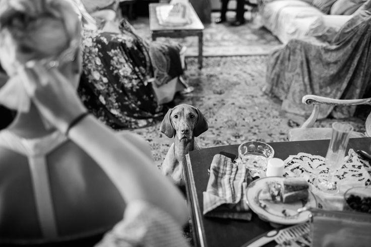 www.martinepayne.com Sydney Portrait Photographer #wedding #photography #newyork #fairytale #gettingready #dog